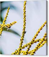 Bee On A Branch I Canvas Print