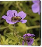 Bee On A Purple Flower Canvas Print