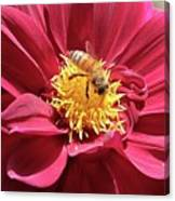 Bee On Beautiful Dahlia Canvas Print