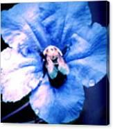 Bee On Blue Flower Canvas Print