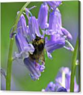 Bee On Bluebell Canvas Print