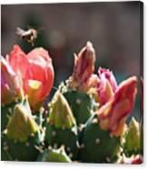 Bee On Cactus In Croatia Canvas Print