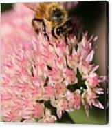 Bee On Flower 4 Canvas Print