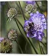 Bee On Flower 4. Canvas Print