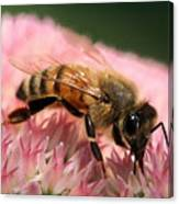 Bee On Flower 6 Canvas Print