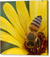 Bee On Flower Canvas Print