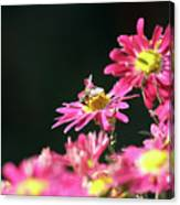 Bee On Flower Spring Scene Canvas Print