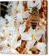 Bee On Flowers 2 Canvas Print