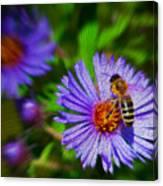 Bee On Lavender Flower Canvas Print