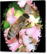 Bee On Pink Flower With Swirly Framing Canvas Print