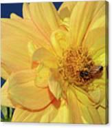 Bee On Pretty Dahlia By Kaye Menner Canvas Print