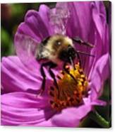 Bee On Purple Flower Canvas Print