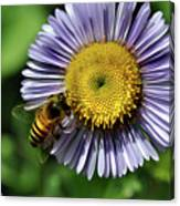 Bee On Purple Petals Canvas Print