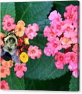 Bee On Rainy Flowers Canvas Print