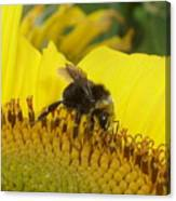 Bee On Sunflower 2 Canvas Print