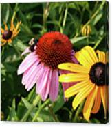 Bee On The Cone Flower Canvas Print