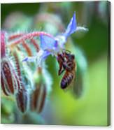 Bee On The Flower 2 Canvas Print
