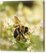 Bee On Top Of Things Canvas Print