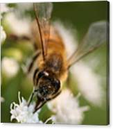 Bee On White Vertical Canvas Print