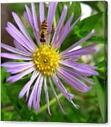 Bee On Wildflower Canvas Print