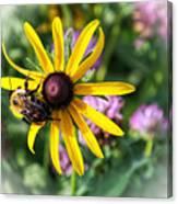 Bee On Yellow Coneflower Canvas Print