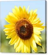 Bee On Yellow Sunflower Canvas Print