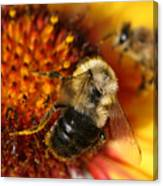 Bee One Canvas Print
