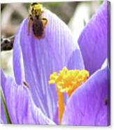 Bee Pollen Canvas Print