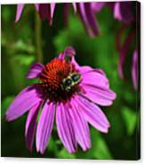 Bee Taking A Rest Canvas Print