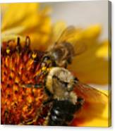 Bee Two Canvas Print