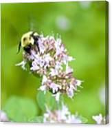 Bee Wings Canvas Print