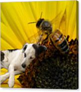 Bee With Dog Canvas Print