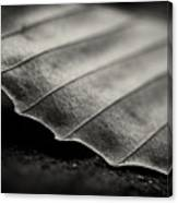 Beech Leaf Detail #1 Canvas Print