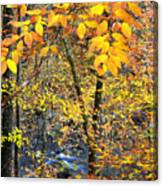Beech Leaves Birch River Canvas Print