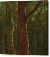 Beech Tree Canvas Print
