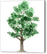 Beech Tree Minimalist Watercolor Painting Canvas Print