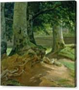 Beech Trees In Frederiksdal Near Copenhagen Canvas Print