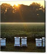 Beehives At Sunrise Canvas Print