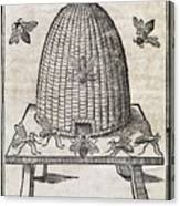 Bees And Beehive, 17th Century Artwork Canvas Print