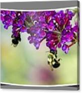Bees On Butterfly Bush Framed Canvas Print