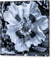 Double Bees On Poppy Bw Canvas Print