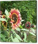 Bees On Sunflower 108 Canvas Print