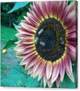 Bees On Sunflower 109 Canvas Print