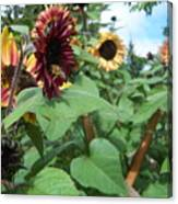 Bees On Sunflower 116 Canvas Print