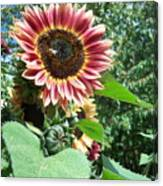 Bees On Sunflower 127 Canvas Print