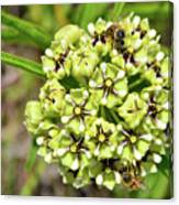 Bees Pollinating Canvas Print