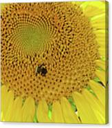Bees Share A Sunflower Canvas Print