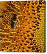 Bee's Sunflower Canvas Print