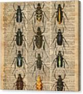 Beetles Bugs Zoology Illustration Vintage Dictionary Art Canvas Print