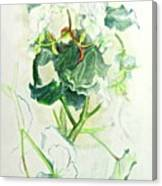 Begonia Ballet Canvas Print